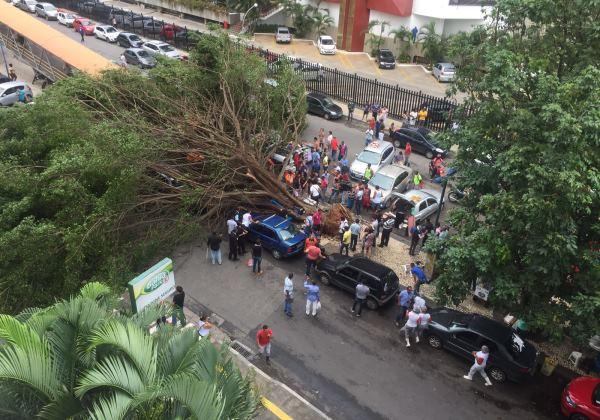 Na última sexta-feira (22), a queda de uma árvore nas proximidades da Casa do Comércio causou a morte da ambulante Berenice Ferreira (Foto: Leitor/bahia.ba)