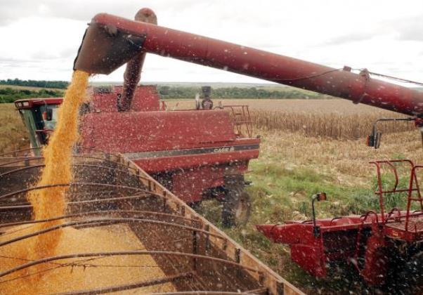 Safra de cereais, leguminosas e oleaginosas (Foto: Agencia Brasil)