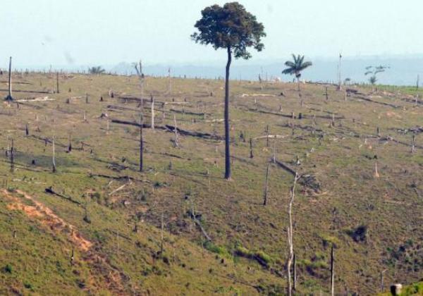 Meta do Brasil na agricultura é restaurar e reflorestar uma área de 12 milhões de hectares (Foto Arquivo/Agencia Brasil)