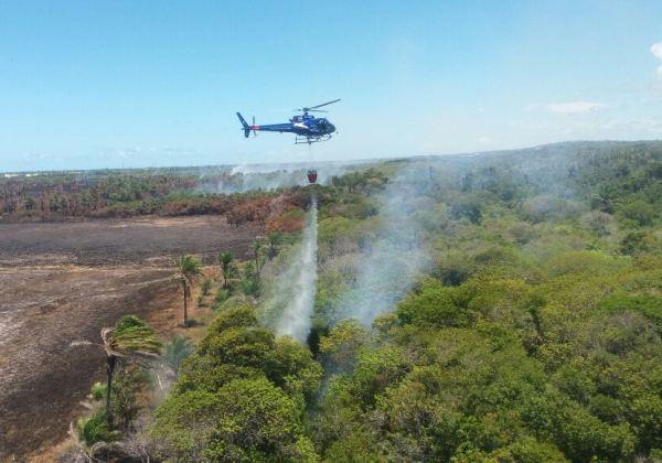 Graer combate incêndio em Praia do Forte (Foto: Divulgação)
