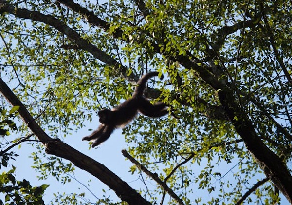Foto: pib.socioambiental.org
