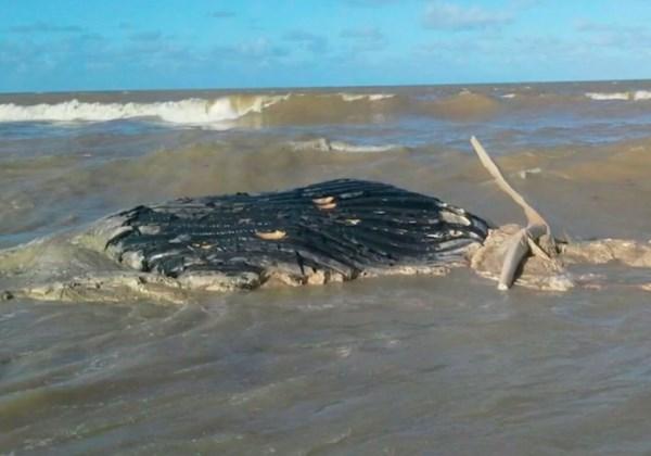 Baleia encalhou e morreu em praia do sul da Bahia (Foto: Reprodução/TV Bahia)