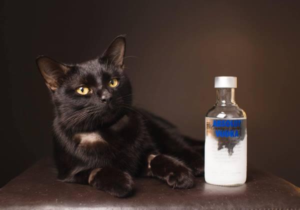 O gato Tippsy tinha apenas uma hora de vida quando chegou no hospital veterinário. Foto: RSPCA Queensland/Facebook